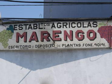 Uvas Marengo