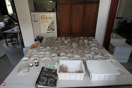 Na foto algumas amostras do Centro de Arqueologia de São Paulo (clique para ampliar).