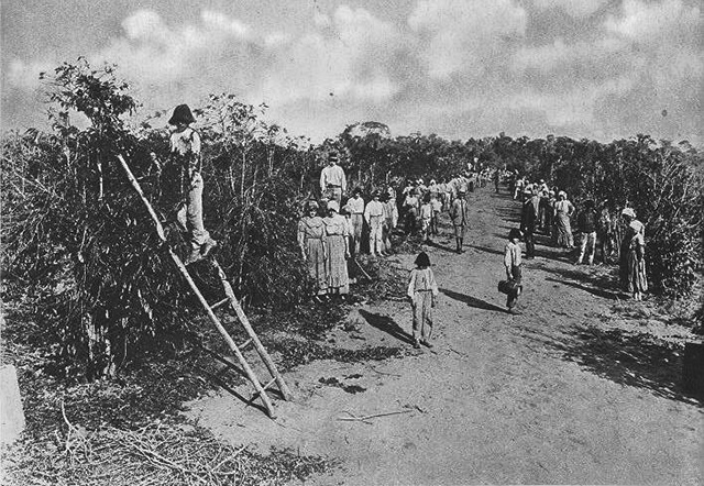 Foto: Colheita de Café em Fazenda Paulista, início do século 20.