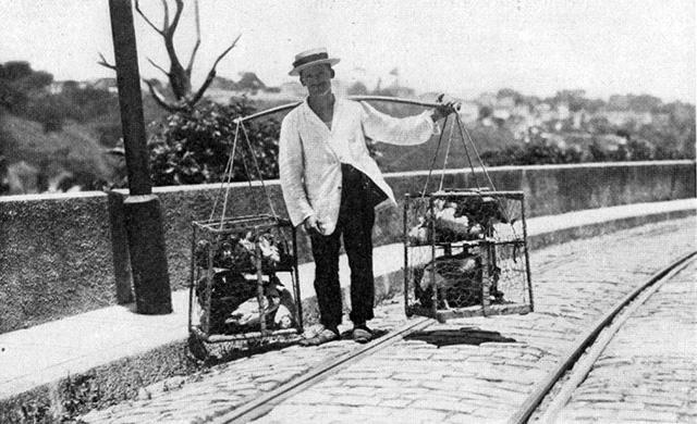 Vendedor de Galinhas - Ano de 1919